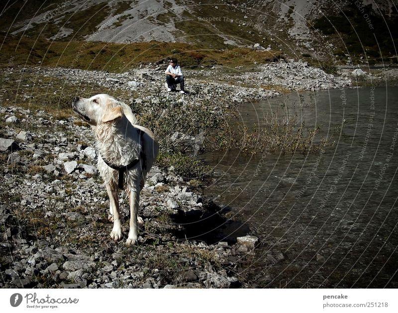in sync Natur Tier Berge u. Gebirge Landschaft Hund träumen See warten Felsen wandern authentisch Alpen Gelassenheit Haustier Vorsicht synchron