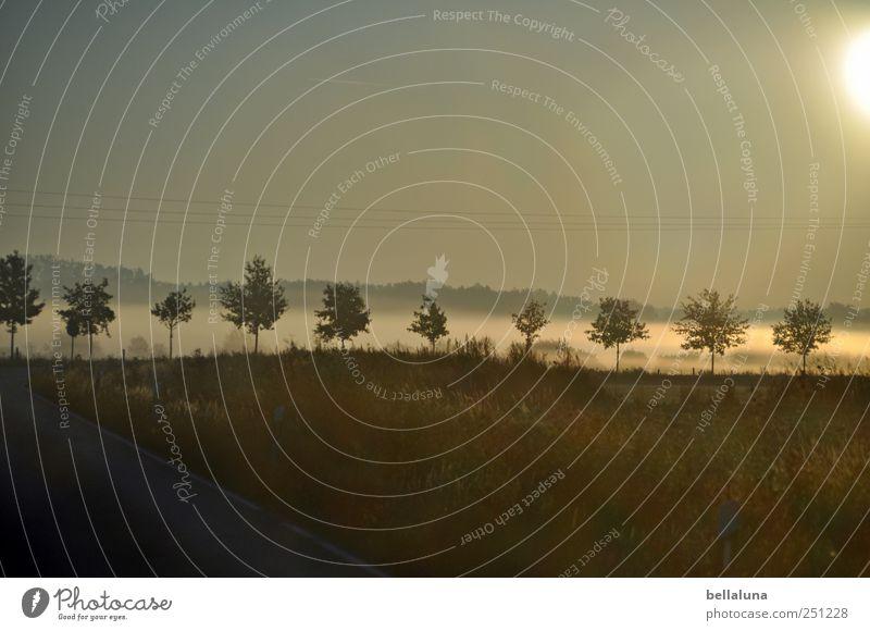 1.300 Nebeltröpfchen für Fotoline und Mella Umwelt Natur Landschaft Pflanze Himmel Wolkenloser Himmel Sonnenaufgang Sonnenuntergang Sonnenlicht Herbst