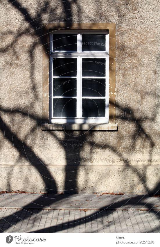 BaumHaus | ChamanSülz Umwelt Mauer Wand Fassade Fenster Stress chaotisch Überraschung Wohnhaus Bürgersteig Straßenbelag Ast Fensterkreuz Fenstersims