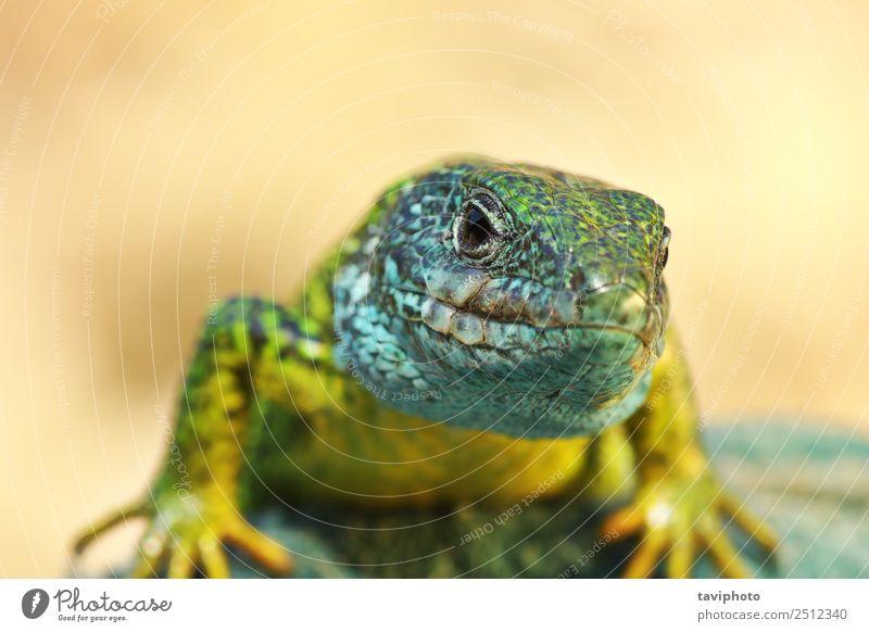 Natur Mann blau schön Farbe grün Tier Erwachsene Umwelt natürlich klein Felsen wild Haut niedlich Lebewesen