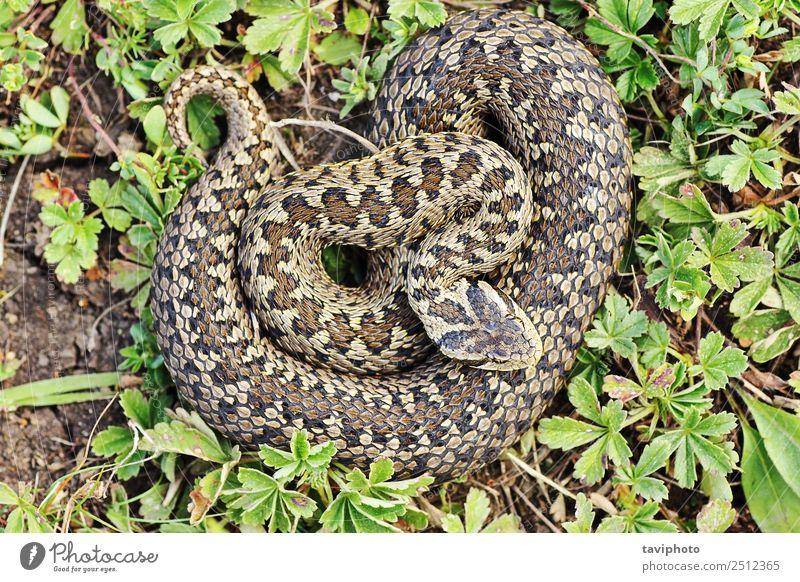 Frau Natur schön Tier Erwachsene Umwelt natürlich Wiese braun wild Angst gefährlich Fotografie Boden Lebewesen Europäer