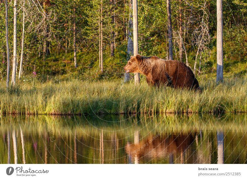 Natur Wasser Baum Tier Wald Umwelt See Erde Wildtier Abenteuer Gelassenheit Säugetier Umweltschutz Bär Tierliebe Jäger