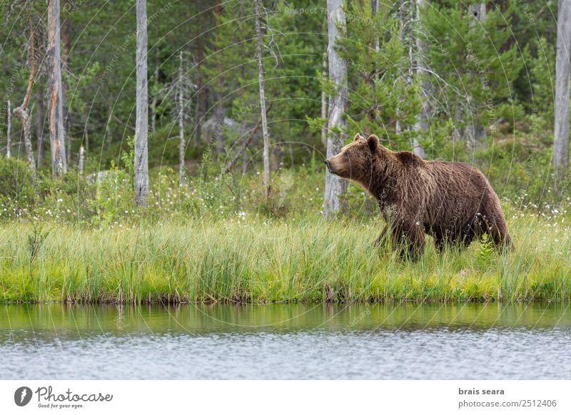 Natur Wasser Landschaft Baum Tier Wald Umwelt See Erde wild Wildtier Abenteuer Wissenschaften Säugetier Umweltschutz gigantisch