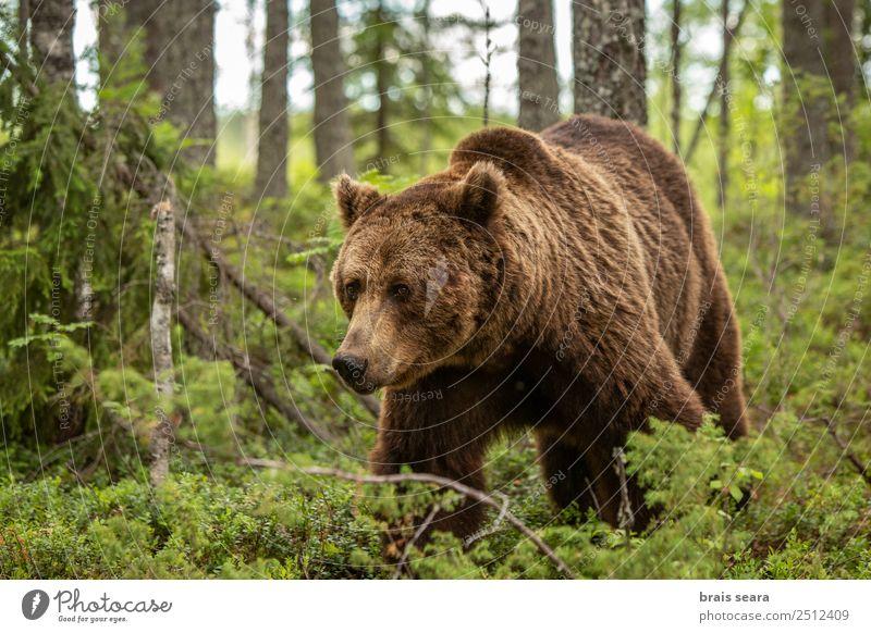 Natur Pflanze schön Baum Tier Wald Umwelt natürlich Erde braun wild Angst frei Wildtier Abenteuer gefährlich