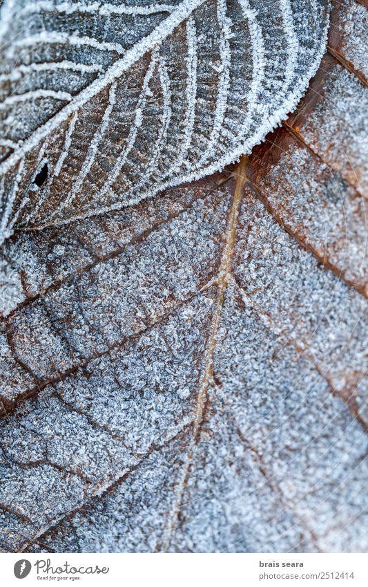 Der Frost geht weg. Winter Umwelt Natur Urelemente Erde Klima Wetter Eis Schnee Pflanze Baum Blatt Wald kalt wild weiß Gelassenheit Tod Umweltschutz gefroren
