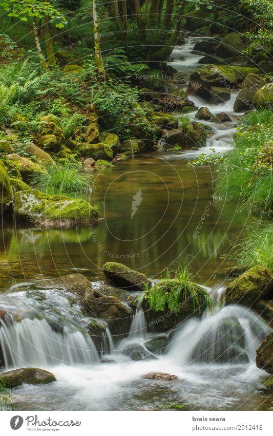 Fluss durch den Wald Wissenschaften Umwelt Natur Landschaft Pflanze Wasser Erde Frühling Klima Wetter Baum Moos Wasserfall nass natürlich wild grün Gelassenheit