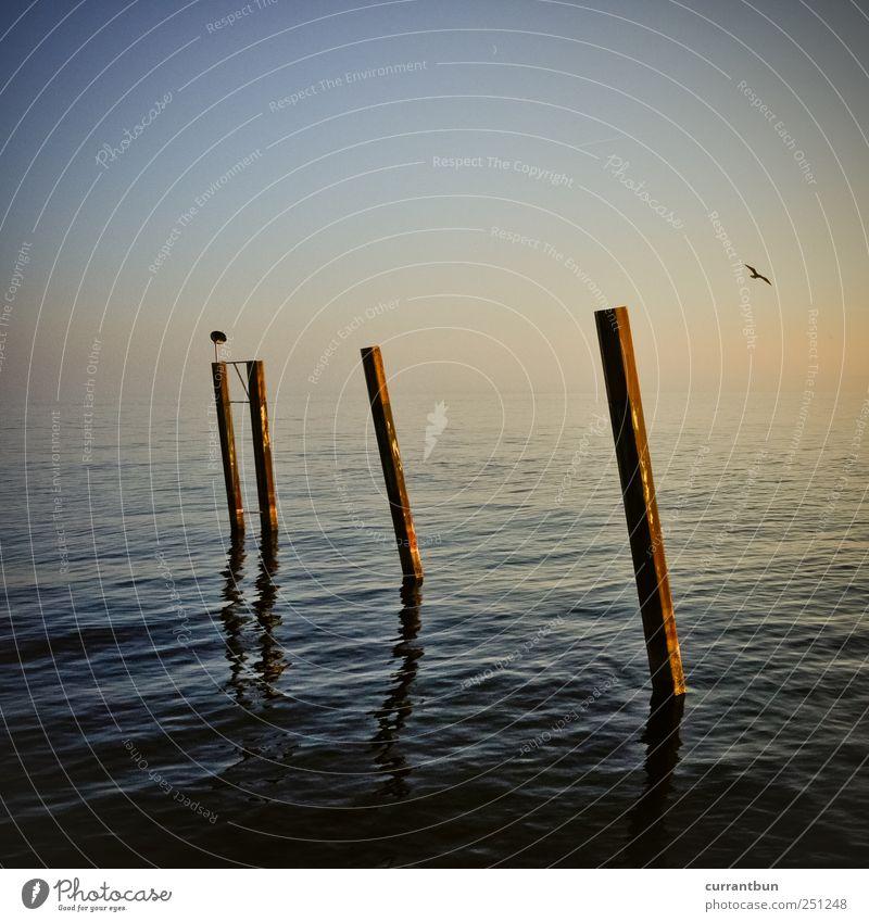 some days last longer than others... Himmel Wasser Glück Stimmung See Freundschaft Zufriedenheit Vogel Fröhlichkeit Warmherzigkeit Seeufer Möwe Pfosten Dunst Sympathie Frühlingsgefühle