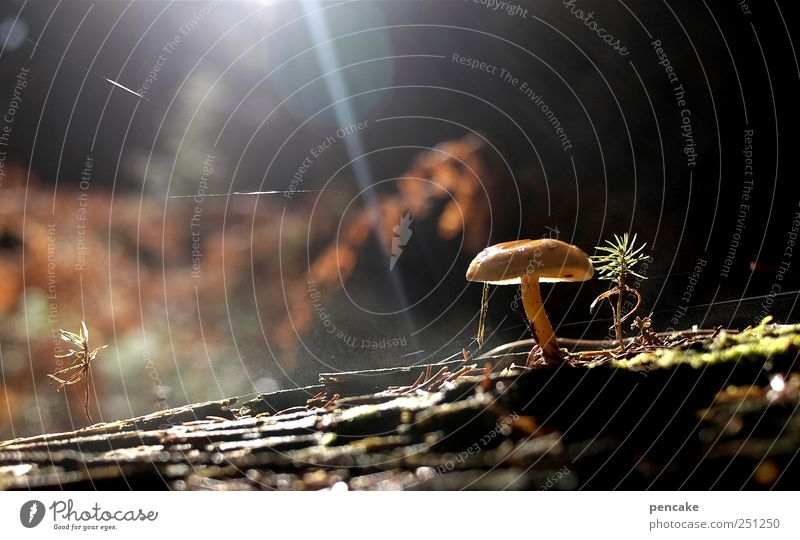 mykomagisch Natur Pflanze Urelemente Erde Wassertropfen Pilz Pilze Wald Stimmung Wasserdampf Dampf Spinngewebe morsch Holz Farbfoto Licht Sonnenstrahlen