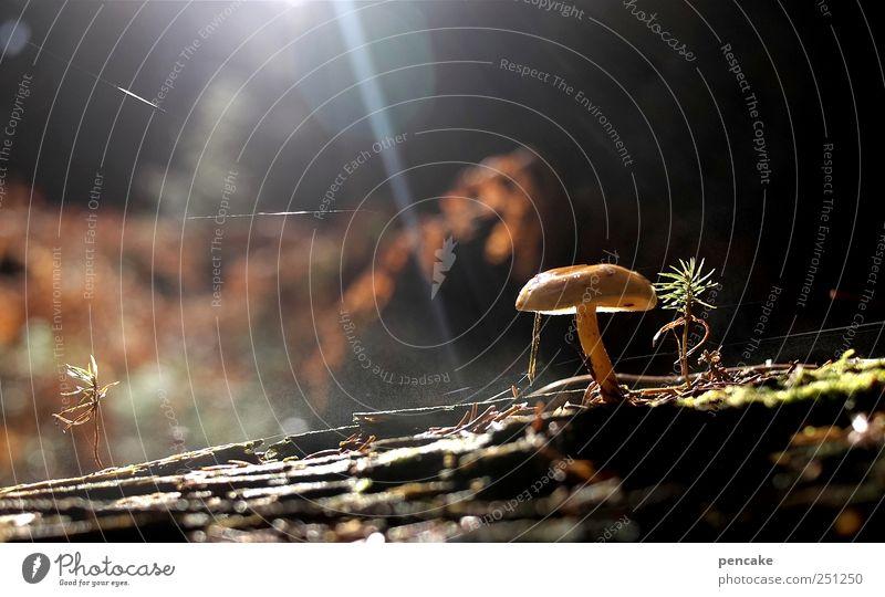 mykomagisch Natur Pflanze Wald Stimmung Erde Wassertropfen Urelemente Wasserdampf Spinngewebe