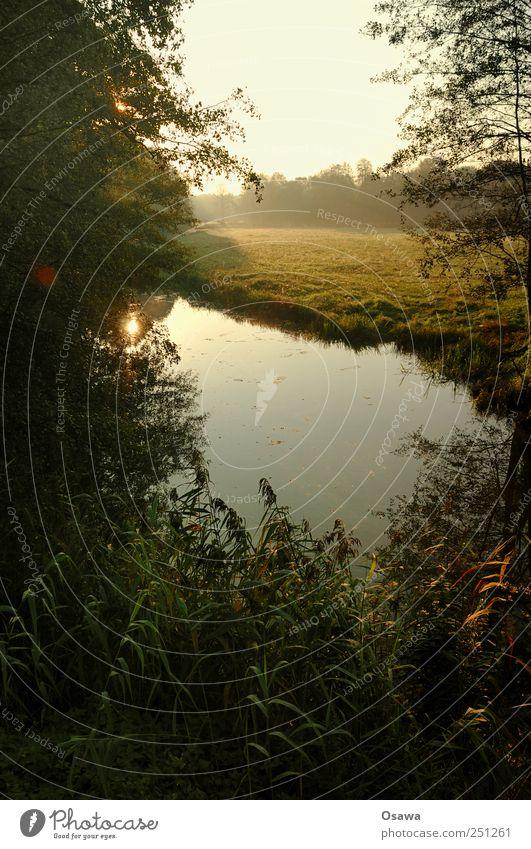Kossenblatt 2 Natur Landschaft Himmel Sonnenaufgang Herbst Schönes Wetter Nebel Dunst Gras Feld Weide Deutschland Zufriedenheit Erholung ruhig Farbfoto