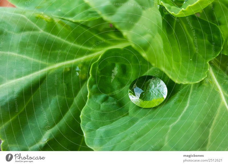 Wassertropfen auf grünem Blatt Natur Pflanze einfach Regentropfen nass Kohlgewächse Kohlblätter Garten Nahaufnahme Farbfoto Außenaufnahme Menschenleer Tag