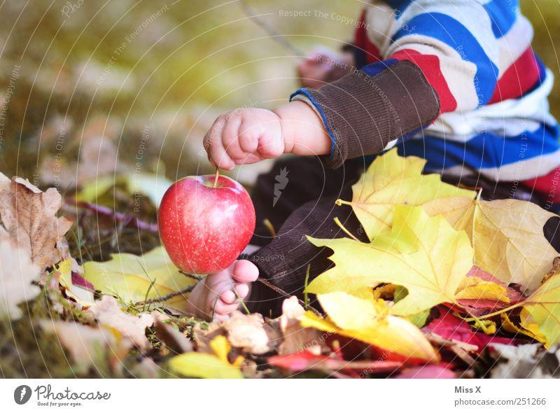 kleiner Adam Kind Mensch Natur Hand rot Wiese Ernährung Herbst Lebensmittel Baby süß niedlich Apfel Kleinkind Ernte lecker