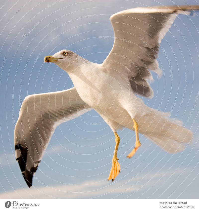 MÖWE Himmel Wolken Tier Vogel 1 fliegen schreien ästhetisch wild Flügel Feder Schnabel Landen gleiten weiß gelb Farbfoto Außenaufnahme Nahaufnahme Menschenleer