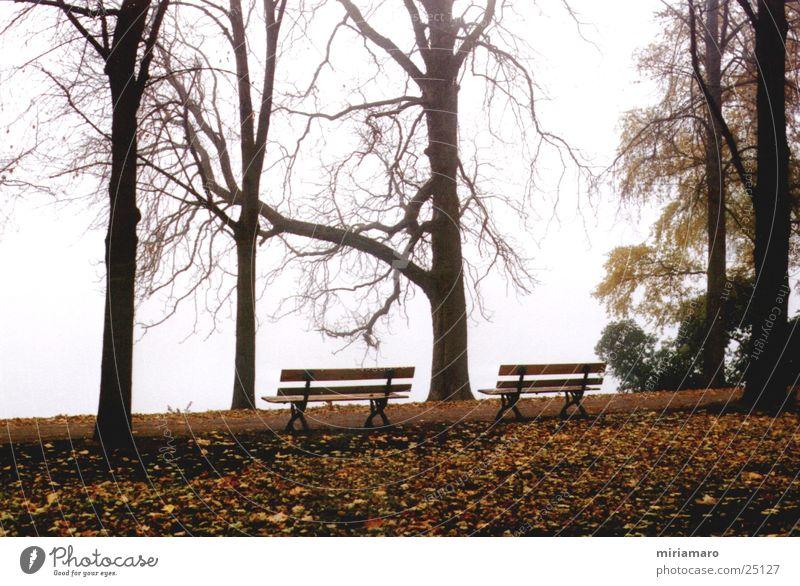 Der Blick in`s Nichts Park Nebel Baum Blatt Landschaft Bank