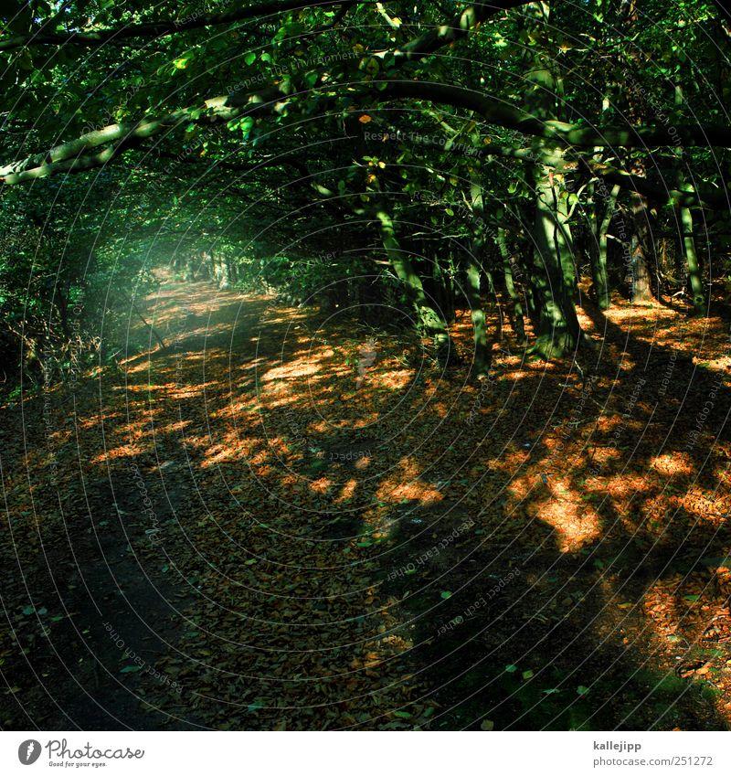 waldspaziergang Natur Baum Pflanze Ferien & Urlaub & Reisen Blatt Tier Wald Herbst Umwelt Landschaft Gras Wege & Pfade Luft Wetter Freizeit & Hobby Erde