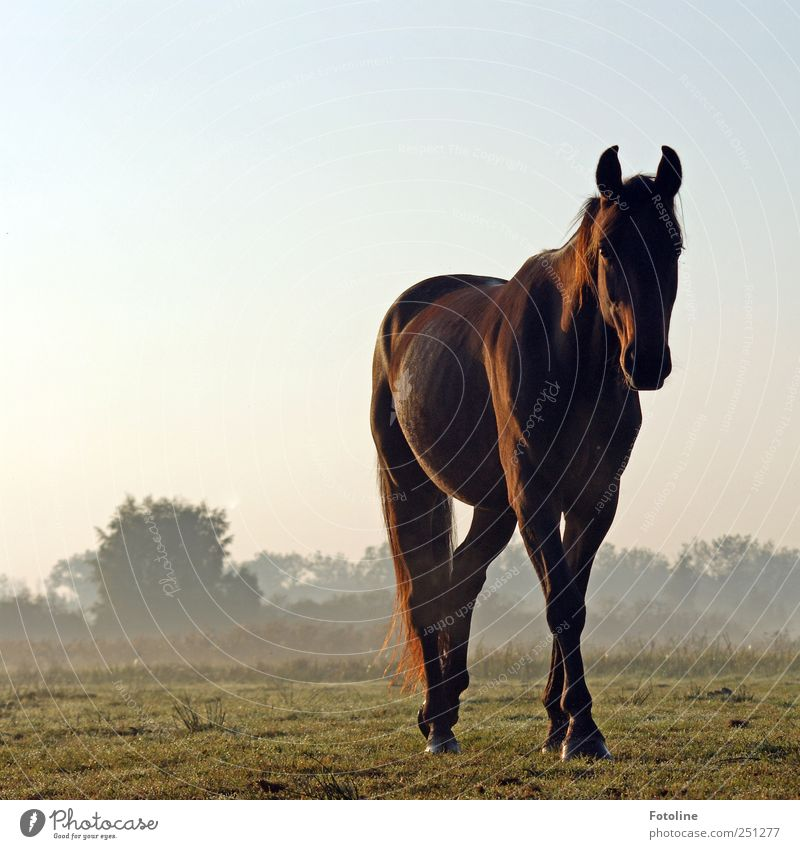 Hallo Schönheit! Himmel Natur Pflanze Tier Wiese Umwelt Landschaft Gras braun Nebel natürlich Sträucher Pferd Tiergesicht Fell Haustier