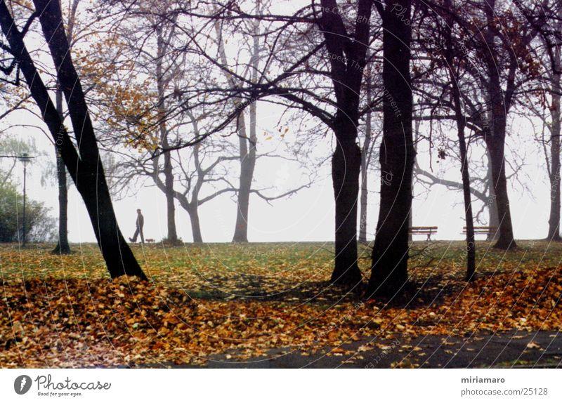 Herbstspaziergang Baum Blatt Hund Nebel Landschaft Mensch