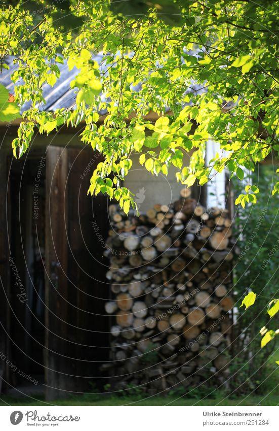 Gut vorgesorgt Natur Pflanze Schönes Wetter Baum Sträucher Blatt Garten Holz glänzend liegen leuchten nachhaltig Warmherzigkeit Gelassenheit ruhig sparsam