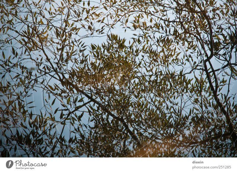[CHAMANSÜLZ 2011] Wasserpflanze Pflanze Baum Sträucher Blatt Ast Park See Fluss nass natürlich Natur Reflexion & Spiegelung Muster Farbfoto Außenaufnahme
