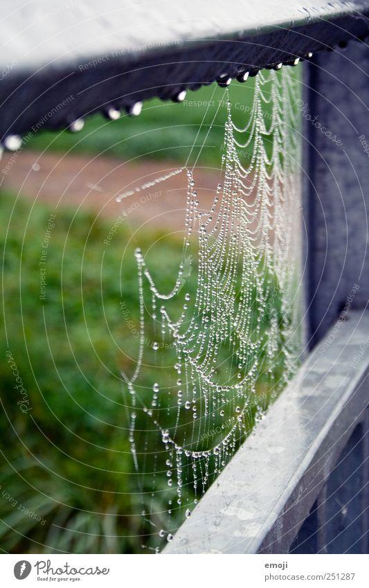 spinnen und tropfen Natur grün Umwelt nass Wassertropfen natürlich Tropfen Geländer schlechtes Wetter Spinnennetz