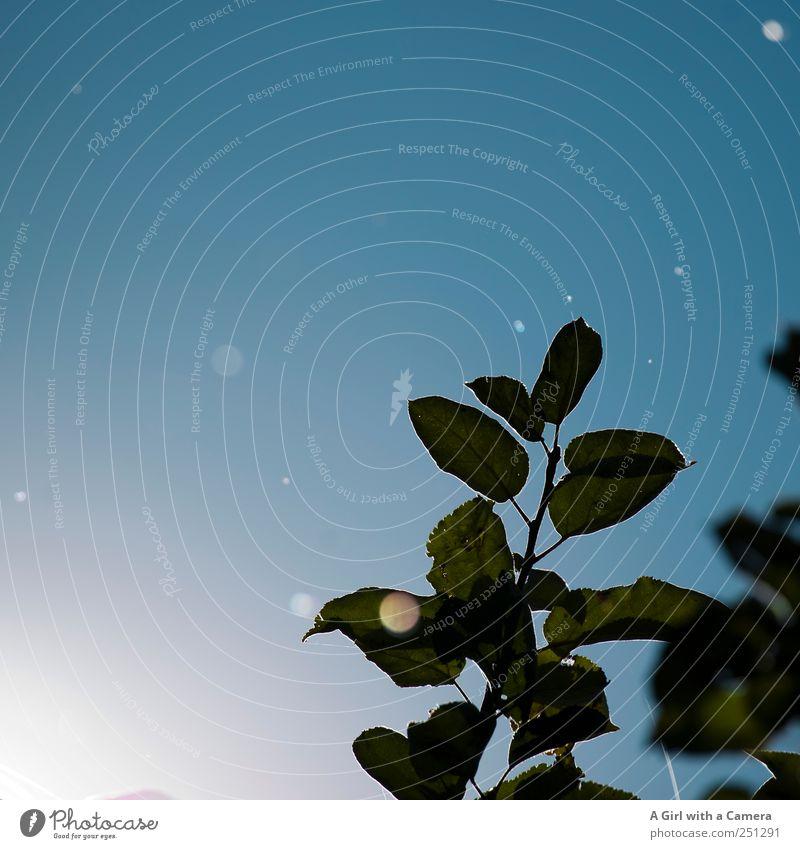 Charmansülz 2011 - glorious dots of light Natur Pflanze Schönes Wetter Blatt Garten Bewegung fliegen leuchten Freundlichkeit Fröhlichkeit frisch schön blau