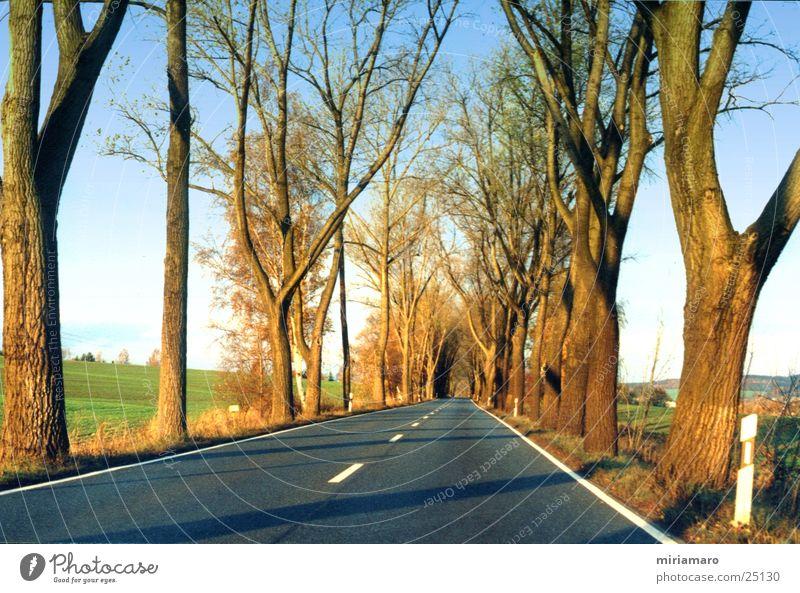 Landstraße im Herbst Baum Licht Asphalt Landschaft Straße Himmel