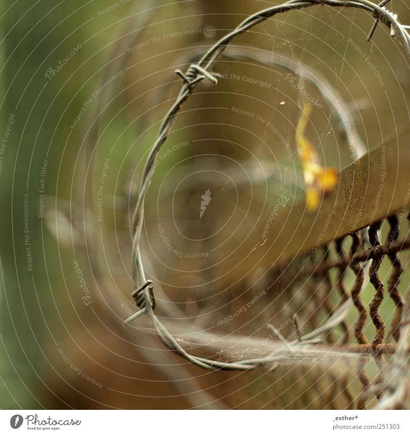 stacheldrahtspirale Metall Rost alt Spitze Sicherheit Schutz Farbfoto Außenaufnahme Experiment Menschenleer Tag Schwache Tiefenschärfe Zentralperspektive