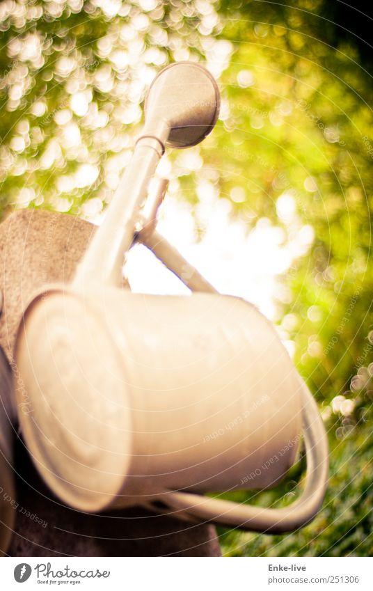 Regenfänger Natur alt grün Einsamkeit Blatt gelb Traurigkeit Tod Garten Park hoch Trauer Stahl Sorge Durst