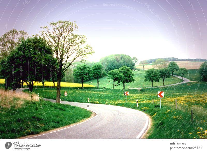 Erzgebirgslandschaft grün Straße Berge u. Gebirge Landschaft Hügel Kurve Erzgebirge