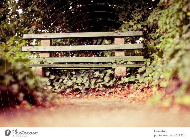 gönn dir eine Pause Natur grün ruhig Garten Sand Stimmung braun sitzen Sträucher Hoffnung Trauer einfach Sehnsucht Schmerz entdecken genießen