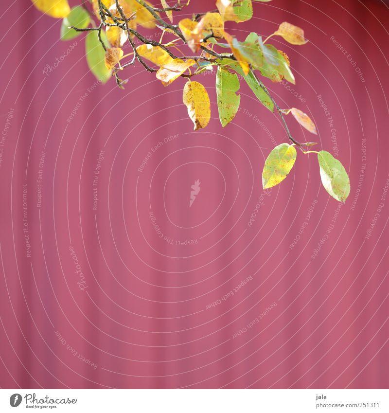 CHAMANSÜLZ | kopfkissen-kollektion Natur grün schön Pflanze rot Blatt gelb Herbst Umwelt natürlich