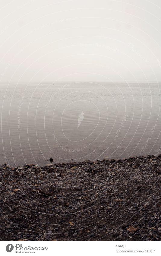 ausufernd Umwelt Natur Landschaft Wasser Himmel schlechtes Wetter Nebel Seeufer Nordsee Ostsee Meer dunkel kalt grau trist Traurigkeit Gedeckte Farben