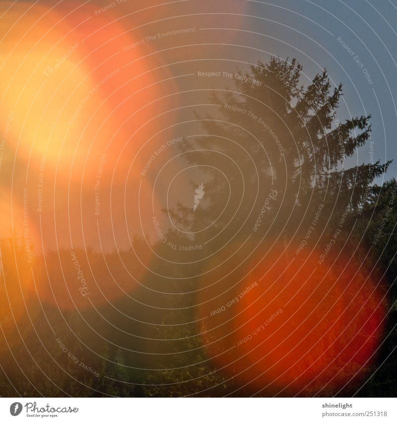 träumend Umwelt Natur Urelemente Blitze Baum Wald Globus modern natürlich wild Stimmung Fröhlichkeit Vertrauen Sicherheit Schutz Warmherzigkeit Romantik Energie