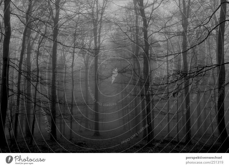 wald Natur Landschaft Winter Nebel Baum Wald ästhetisch bedrohlich kalt natürlich schwarz weiß Gefühle Kraft Sehnsucht Freiheit Leben Stimmung Tod Unendlichkeit