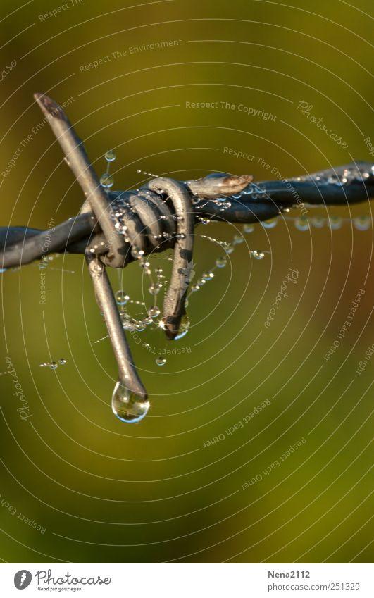 Stacheldraht Träne Wasser grün grau Metall Regen nass Wassertropfen Tropfen Zaun Grenze Tau blockieren stachelig schließen Knoten