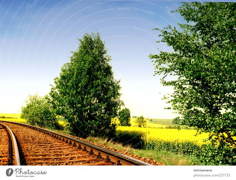 Mit der Eisenbahn durchs Rapsfeld Sommer Baum Bahnschiene Farbe Himmel
