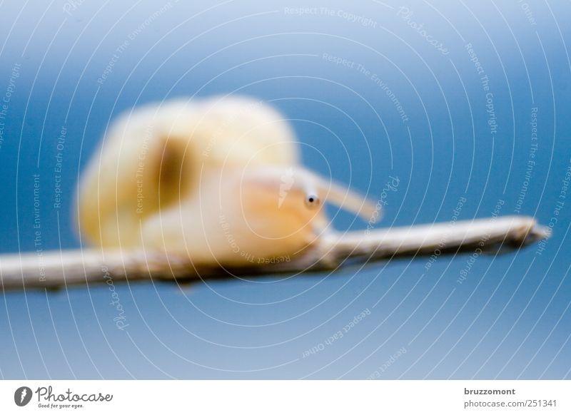 Eyes am Stiel blau Tier Kindheit Tierjunges Wildtier Tiergesicht Neugier Kontrolle Interesse Schnecke