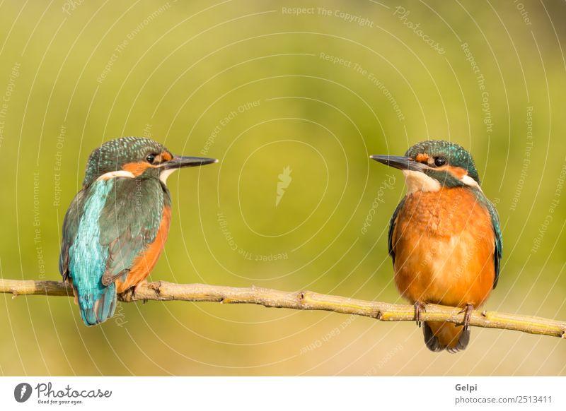 Natur blau schön Farbe grün weiß Tier Erwachsene Umwelt Liebe natürlich Paar Vogel wild Park Europa