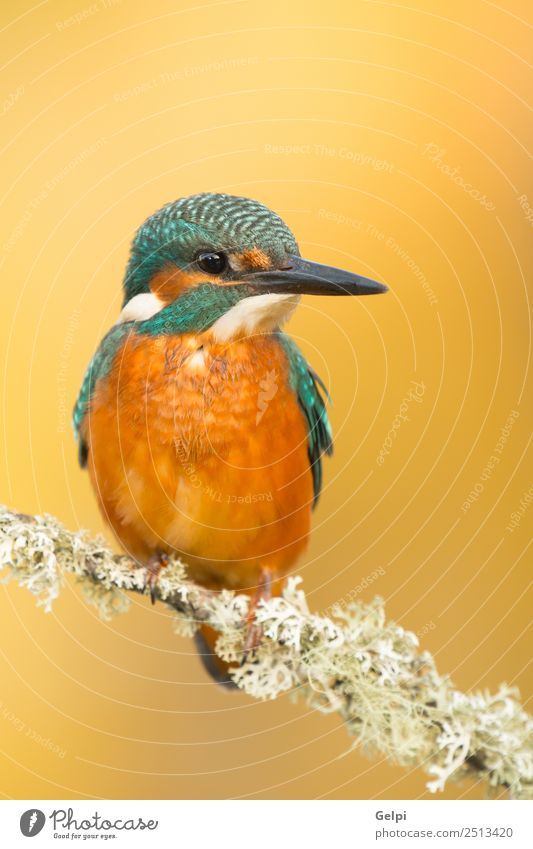 Natur blau schön Farbe grün weiß Tier Erwachsene Umwelt natürlich Vogel wild Park Europa Feder Fotografie