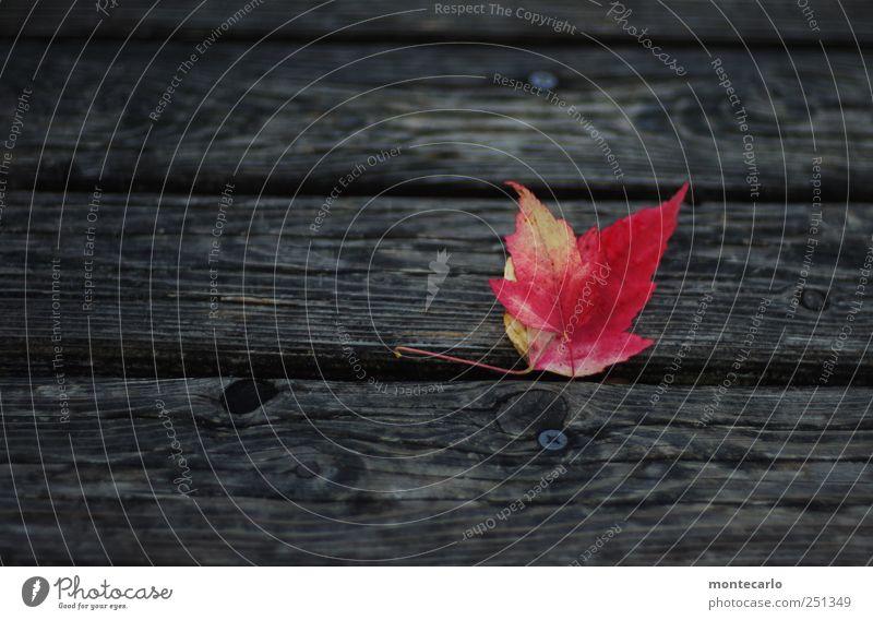 Laub Natur Pflanze rot Blatt schwarz dunkel Herbst Umwelt Park natürlich trocken schlechtes Wetter Grünpflanze