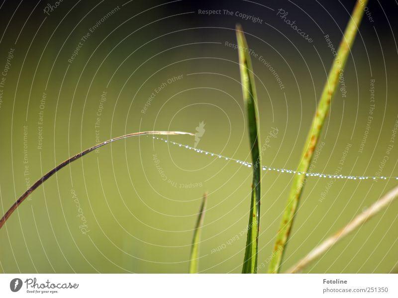 taufrisch Umwelt Natur Pflanze Urelemente Wasser Wassertropfen Gras Garten Wiese hell nass natürlich grün Farbfoto mehrfarbig Außenaufnahme Nahaufnahme