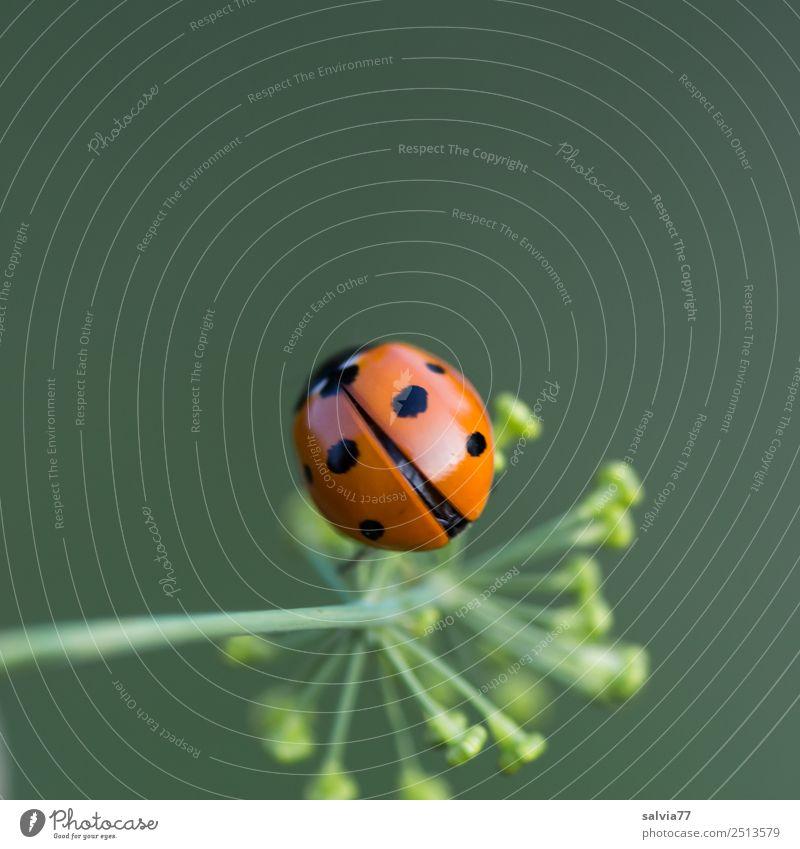 fliegt er oder nicht? Natur Sommer Pflanze grün Tier Frühling Blüte Glück Garten orange Flügel niedlich Insekt positiv Käfer krabbeln