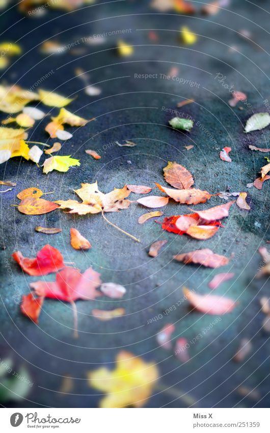 bunt, bunter, Herbst Blatt Straße Wege & Pfade fallen mehrfarbig gelb rot Herbstlaub Ahornblatt Bürgersteig herbstlich Farbfoto Außenaufnahme Nahaufnahme Muster