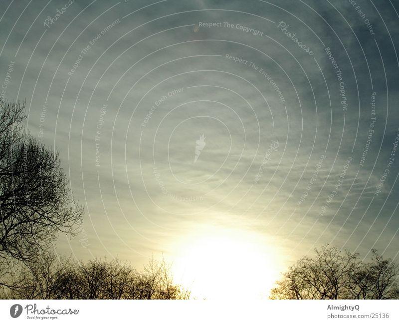 Lichtspiel Sonne Wolken Herbst Baum groß hell kalt Baumkrone Windstille Frost Winterabend clouds sun dawn dusk trees bright Winter evening silence Kontrast