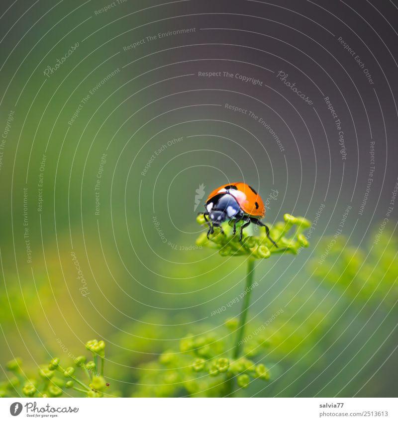 den Überblick behalten Natur Sommer Pflanze schön grün Tier gelb Blüte Glück klein Garten orange oben Kräuter & Gewürze Ziel Insekt
