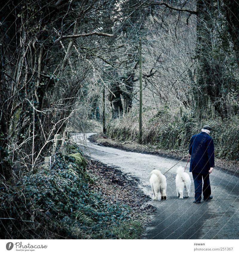 Sonntagsspaziergang Mensch Mann Natur Baum ruhig Einsamkeit Tier Wald dunkel kalt Berge u. Gebirge Senior Hund Wege & Pfade Stimmung nass
