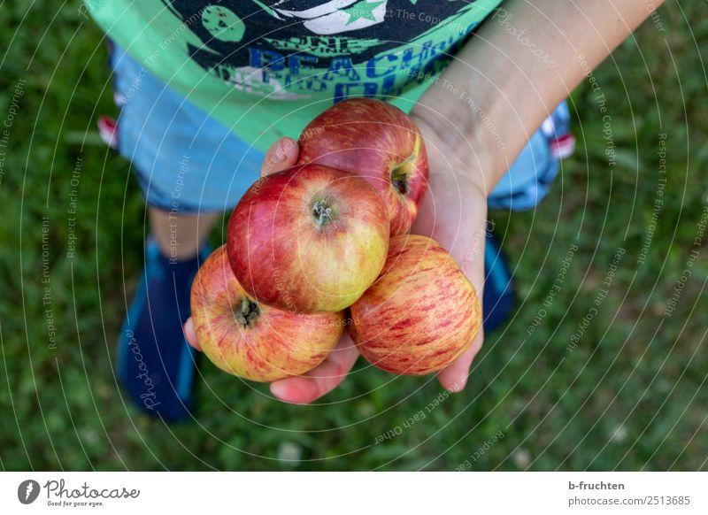 leckere Äpfel Lebensmittel Frucht Apfel Bioprodukte Vegetarische Ernährung Gesunde Ernährung Kind Kindheit Hand Finger Gras Garten Wiese festhalten stehen