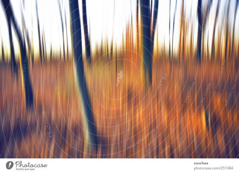 im wald II Himmel Natur Wald Herbst Umwelt Landschaft Klima außergewöhnlich