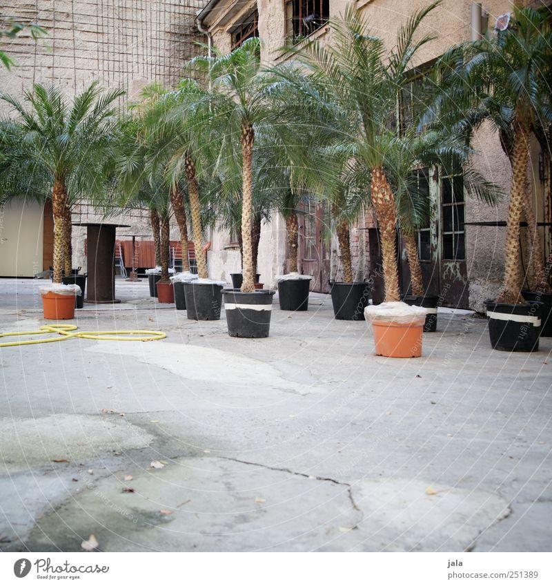 CHAMANSÜLZ | palm springs Pflanze Topfpflanze Haus Fabrik Platz Bauwerk Gebäude Mauer Wand Fassade trist Palme Farbfoto Menschenleer Tag
