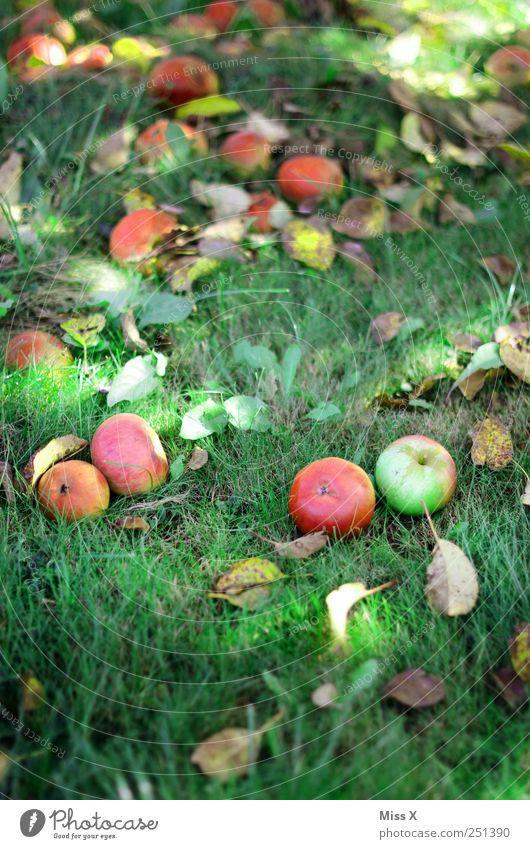 Apfelernte rot Blatt Wiese Herbst Gras Lebensmittel süß rund fallen Ernte lecker Bioprodukte saftig Herbstlaub Apfelbaum